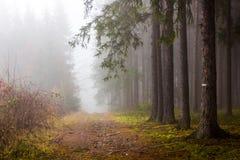 Rastro a través de un bosque misterioso en niebla Fotos de archivo libres de regalías