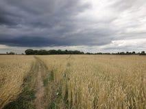 Rastro a través de un campo de trigo imagenes de archivo
