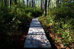 Rastro a través del bosque Foto de archivo