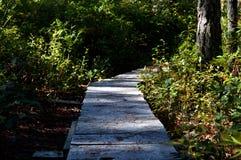 Rastro a través del bosque Foto de archivo libre de regalías
