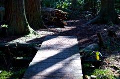Rastro a través del bosque Fotos de archivo libres de regalías