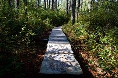 Rastro a través del bosque Imagenes de archivo