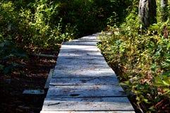 Rastro a través del bosque Fotografía de archivo libre de regalías