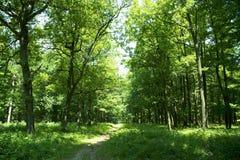 Rastro a través del bosque Imagen de archivo libre de regalías