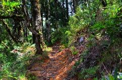 Rastro y bosque, Costa Rica fotografía de archivo libre de regalías
