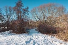 Rastro y río nevados a través del bosque desnudo Fotos de archivo libres de regalías