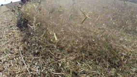 Rastrojo de siega del maíz después de la cosecha almacen de video