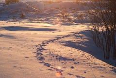 Rastros de animales en la nieve en la puesta del sol Fotos de archivo libres de regalías