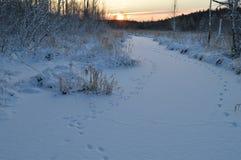 Rastros de animales a lo largo del hielo nevoso del río congelado invierno del bosque a la salida del sol de la mañana Fotos de archivo libres de regalías