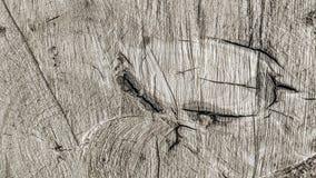 Rastros de cortes en un tronco imagen de archivo