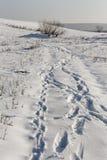 Rastros de la nieve fotografía de archivo libre de regalías