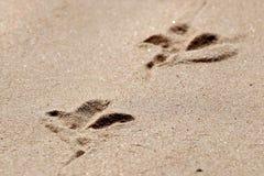 Rastros de pájaros en el primer amarillo de la arena Imagen de archivo