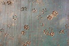 Rastros de perro en el piso, huellas animales de la visión superior en el hormigón imágenes de archivo libres de regalías