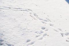 Rastros de ratones en la nieve, derivas Fotos de archivo