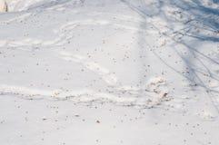 Rastros de ratones en la nieve, derivas Foto de archivo