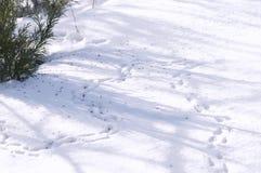 Rastros de ratones en la nieve, derivas Foto de archivo libre de regalías