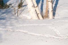 Rastros de ratones en la nieve, derivas Fotografía de archivo