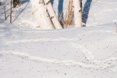 Rastros de ratones en la nieve, derivas Fotos de archivo libres de regalías