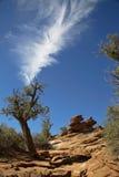 Rastros de Zion Park Imagen de archivo libre de regalías