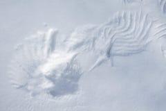 Rastros del ala en la nieve. Foto de archivo libre de regalías