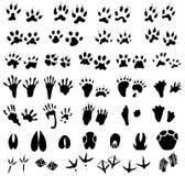 Rastros del animal y del pájaro Imagenes de archivo