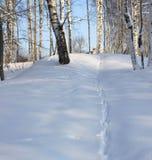 Rastros del conejito en la nieve Imagen de archivo