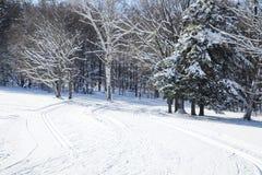 Rastros del esquí de fondo Bosque del invierno cubierto con nieve Na Fotografía de archivo libre de regalías