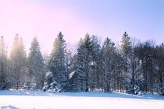 Rastros del esquí de fondo Bosque del invierno cubierto con nieve Na Foto de archivo libre de regalías