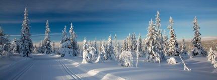 Rastros del esquí del campo a través Imágenes de archivo libres de regalías