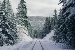 Rastros del esquí en una colina nevosa escarpada en el bosque imagenes de archivo