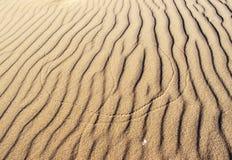 Rastros del insecto en la arena Imagen de archivo