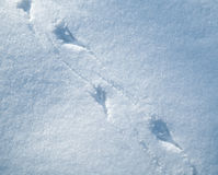 Rastros del pájaro en nieve Foto de archivo