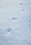 Rastros del pájaro en nieve Fotografía de archivo