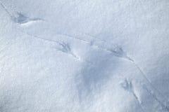 Rastros del pájaro en nieve Imágenes de archivo libres de regalías