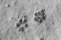 Rastros del perro Imagen de archivo libre de regalías