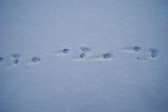 Rastros del perro de las liebres en una nieve fresca fotos de archivo