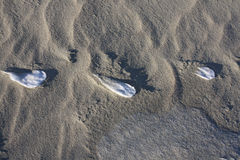Rastros en dunas en invierno Fotografía de archivo