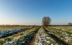 Rastros en el prado congelado Fotografía de archivo libre de regalías