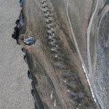 Rastros en la arena Imagen de archivo libre de regalías