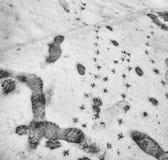 Rastros en nieve Foto de archivo libre de regalías