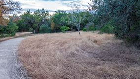 Rastros que caminan en un Forest Park reservado, sereno, pacífico con los árboles verdes vibrantes y la vegetación fotografía de archivo