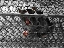 Ratón atrapado en una jaula del metal Imagen de archivo libre de regalías