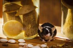 Ratón con el tarro y la seta en el sótano Fotos de archivo libres de regalías