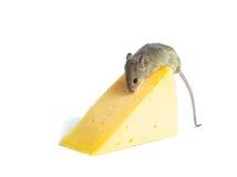 Ratón con queso Fotos de archivo