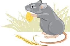 Ratón con un pedazo de queso y de espiguilla Imagen de archivo libre de regalías