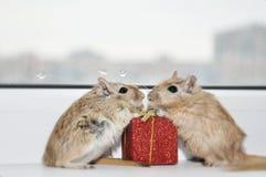 Ratón con un regalo Fotos de archivo