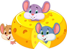 Ratón de la historieta que oculta el queso cheddar interior Imagenes de archivo