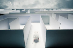 Ratón dentro de una iluminación dramática del wih del laberinto imagenes de archivo