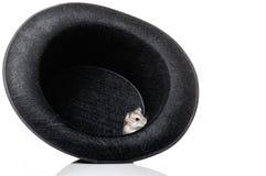 Ratón dentro del sombrero Imagen de archivo libre de regalías