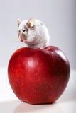 Ratón divertido en manzana roja grande Imágenes de archivo libres de regalías